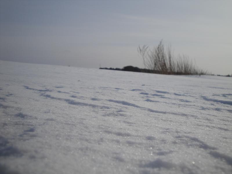 Winter 2010 (8)