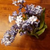 Blume: Innenaufnahme